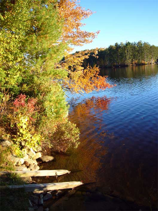 Fall at White Oak Pond